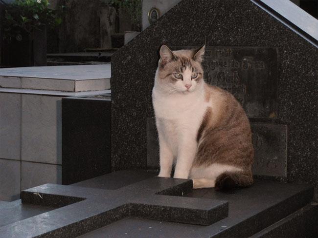 CatsOfNecropolis01