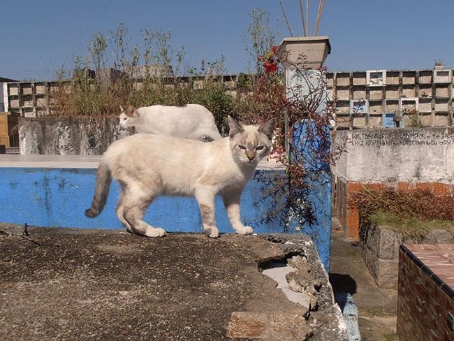 CatsOfNecropolis02