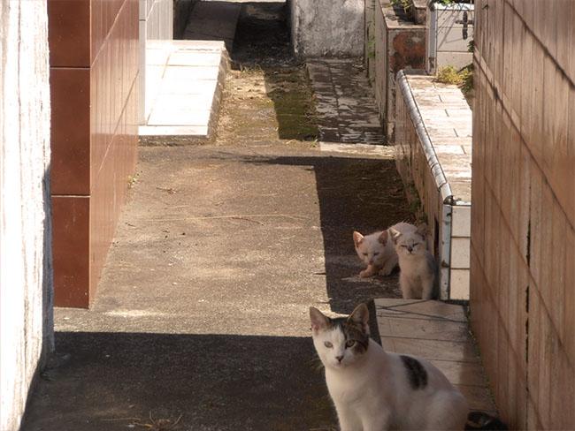 CatsOfNecropolis03