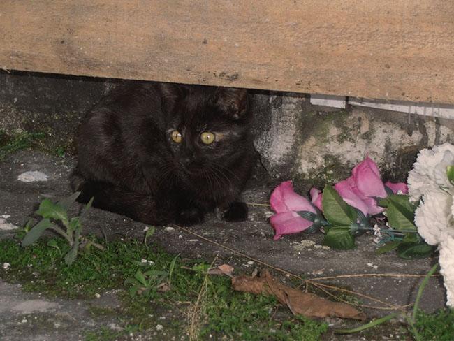 CatsOfNecropolis04