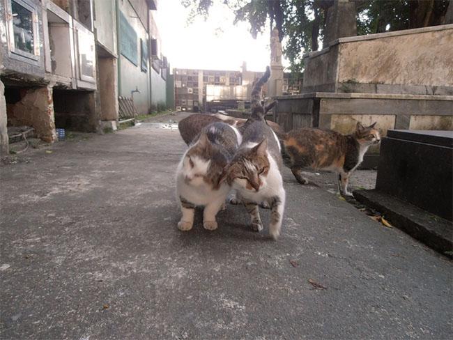CatsOfNecropolis06