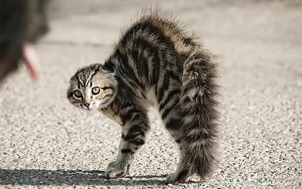aggressive kitt