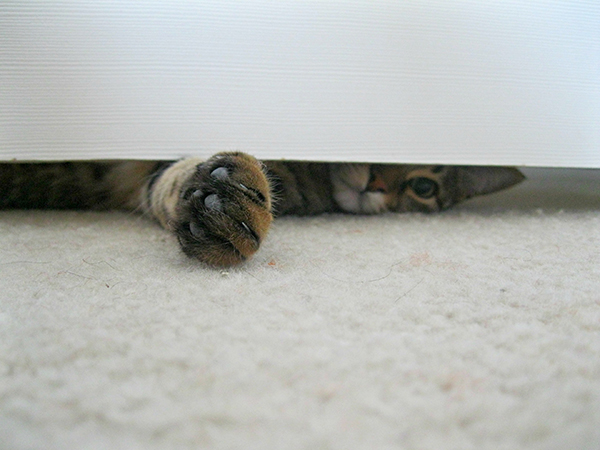 cat closed door