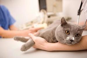 cat hosp