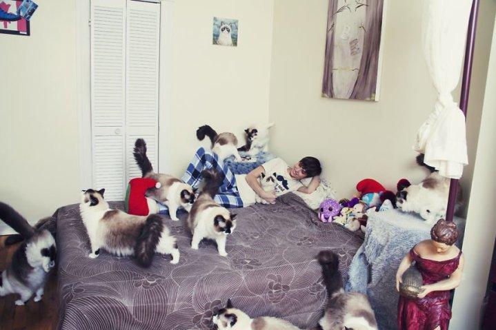 gatos-1-719x479