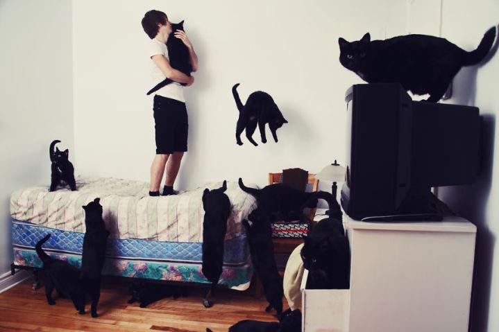 gatos-4-719x479