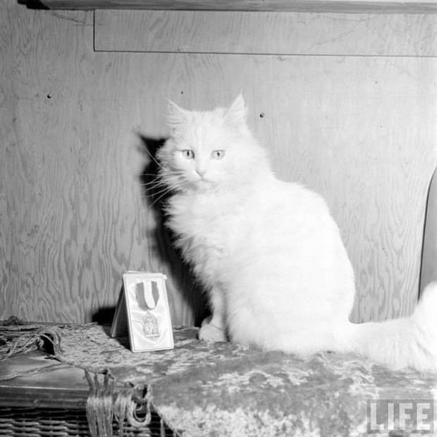 primeiro-gato-guia-mundo-01