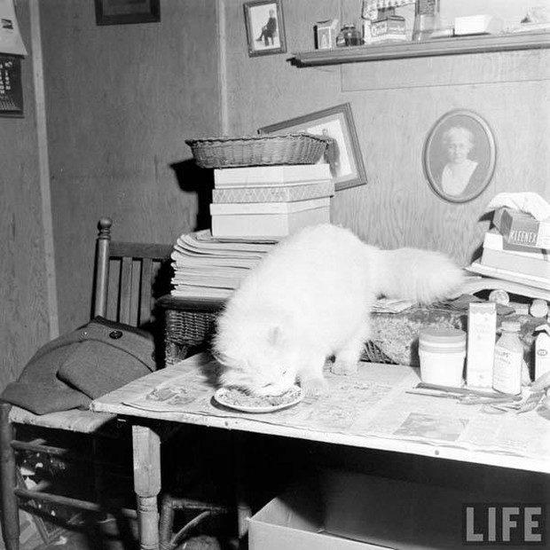 primeiro-gato-guia-mundo-12