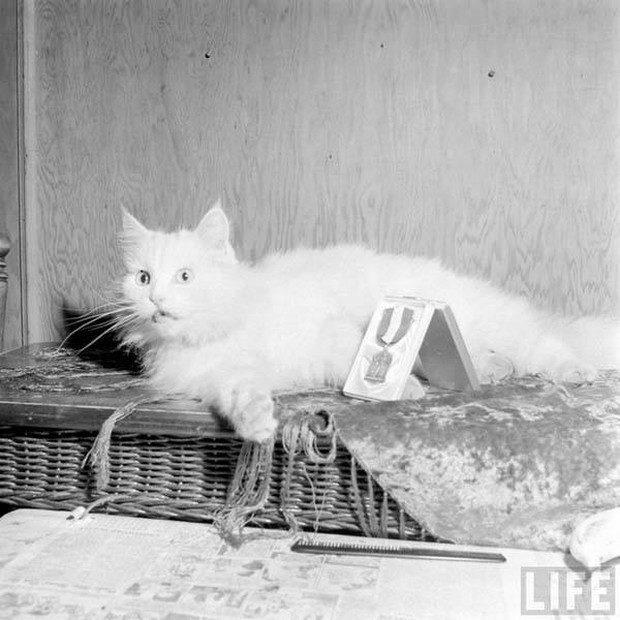 primeiro-gato-guia-mundo-13