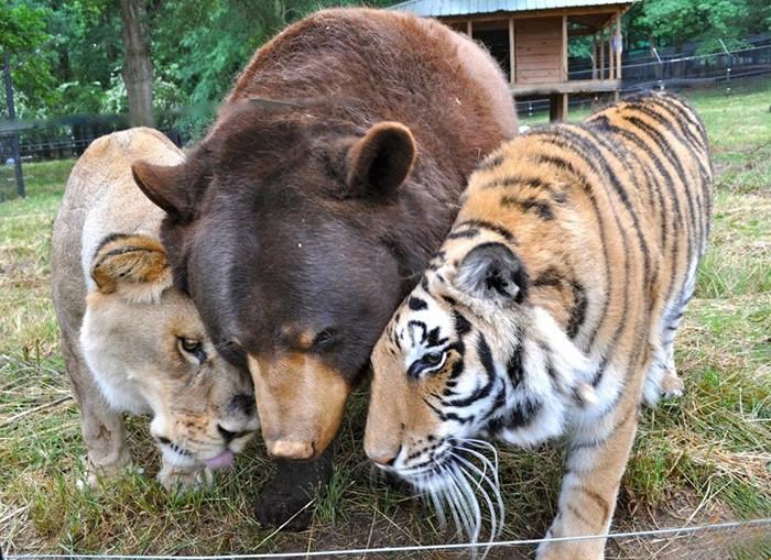 animais-trio