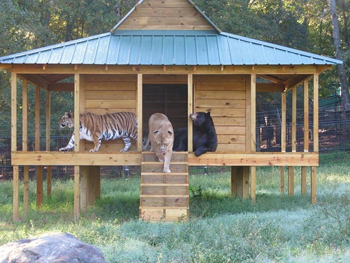 animais-trio1