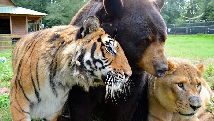 animais-trio2