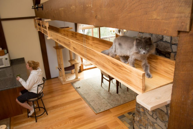 Massachusetts-Home-Transformed-into-Cats-Paradise-570538eb509ef__880