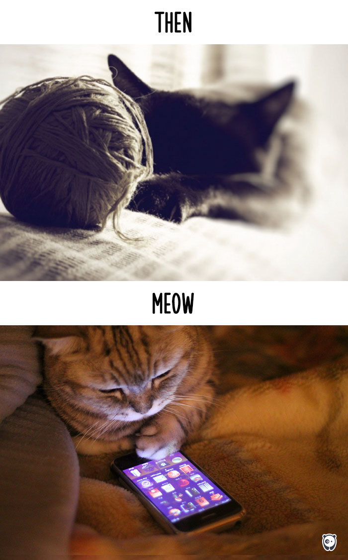 cats-then-now-funny-technology-change-life-2-5715f4cf7fd7f__700