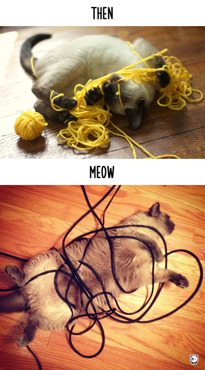 cats-then-now-funny-technology-change-life-7-571600912d6af__700