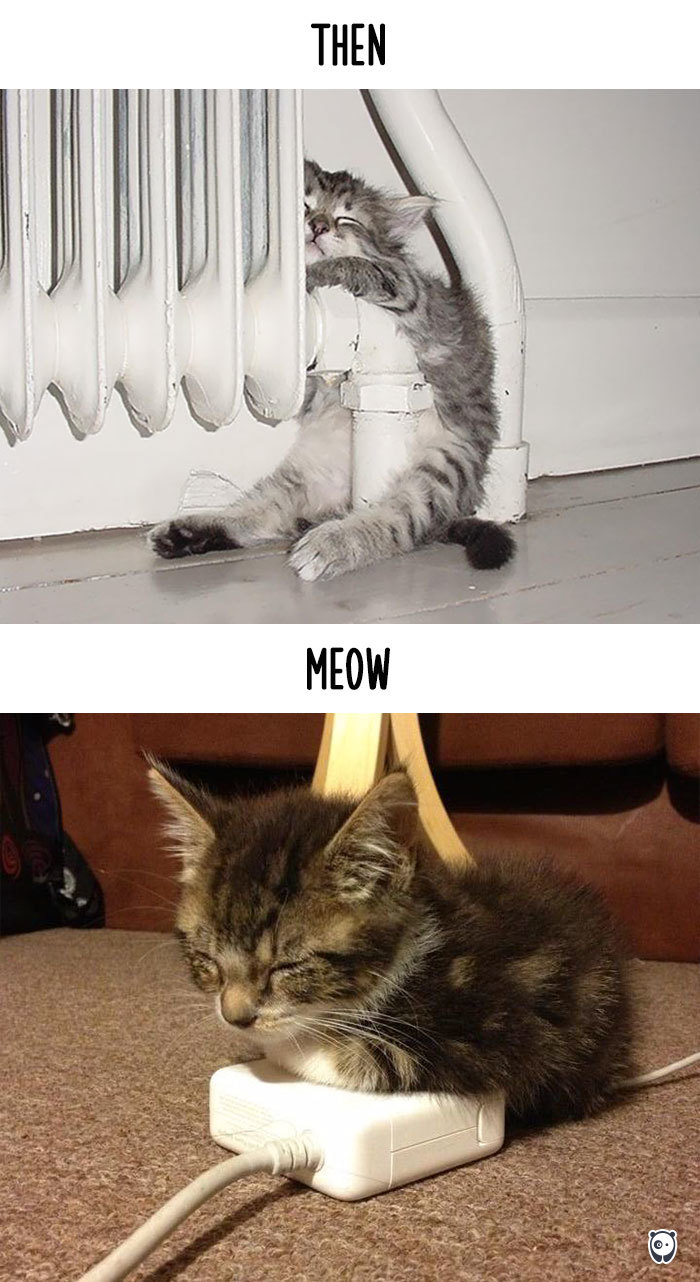 cats-then-now-funny-technology-change-life-9-57161749f2b9d__700