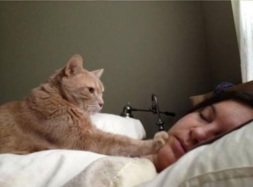despertarse-con-gato-500x371
