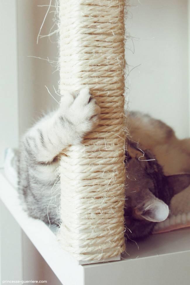 dicas-para-donos-de-gatos-1