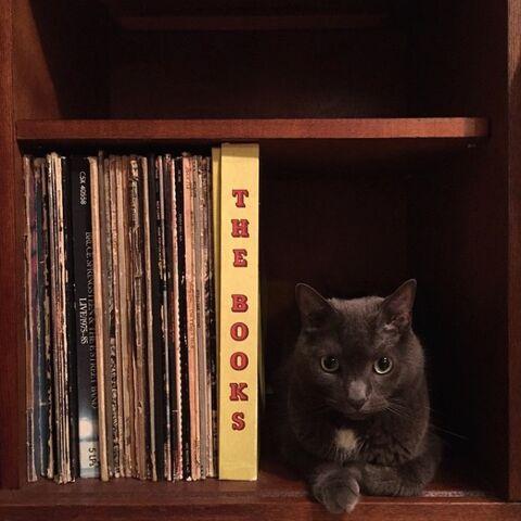 dicas-para-donos-de-gatos-241