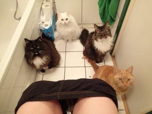 privacidad-con-gatos-500x375