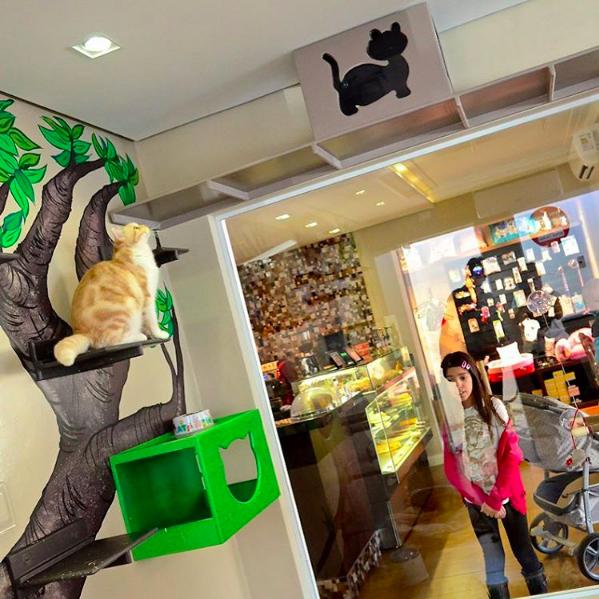 Aquário do Café com Gato