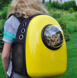 Gato em sua catpack observando a paisagem. Fonte: Facebook U-pet