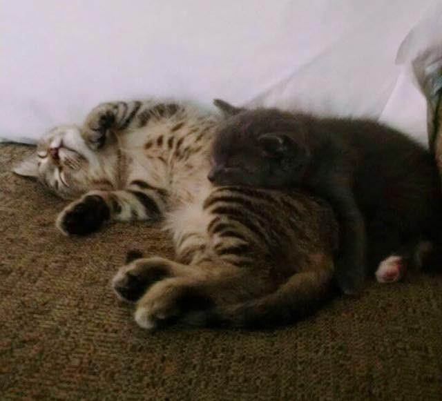 Teddy se aquecendo na irmã adotiva  Olive