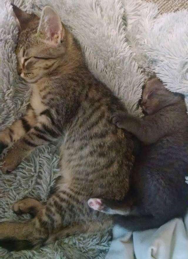 Teddy e Olive dormindo juntinhos