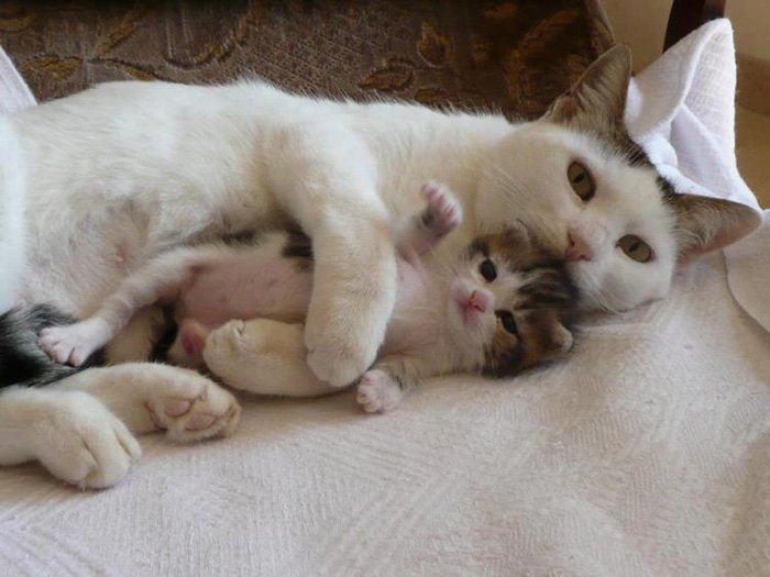 Agarradinho com a mamãe