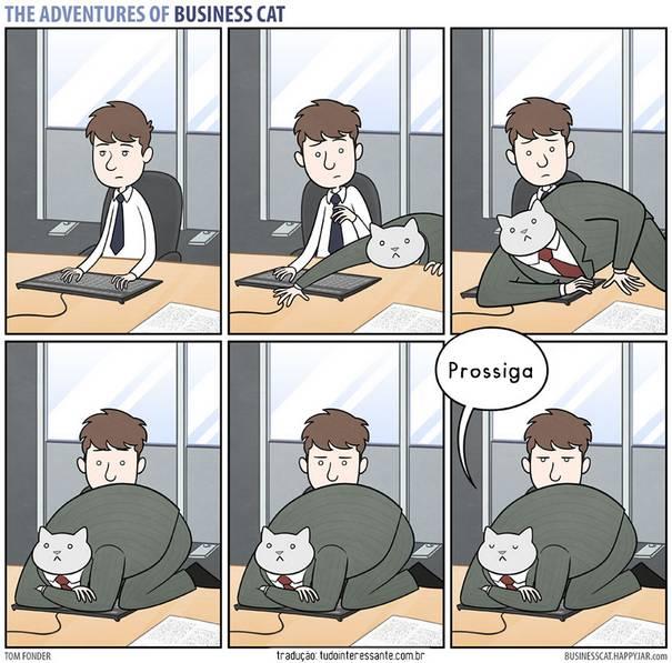 Gato CEO 8