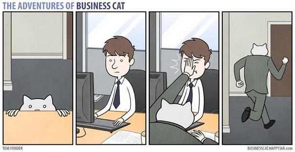 Gato CEO 10