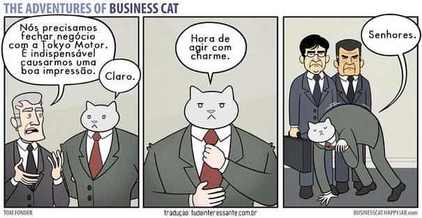 Gato CEO 3