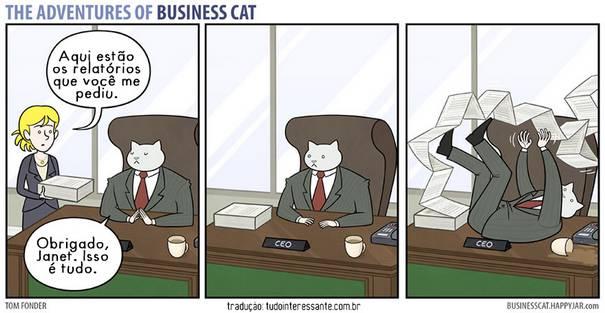 Gato CEO 5