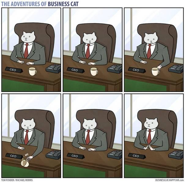 Gato CEO 6