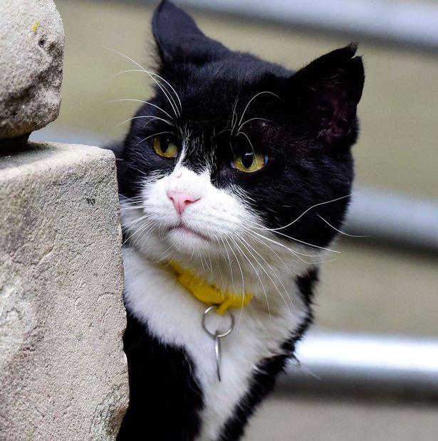 Palmerston, com cara de poucos amigos.