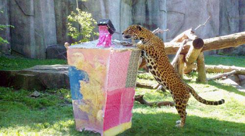 enriquecimento ambiental zoologico