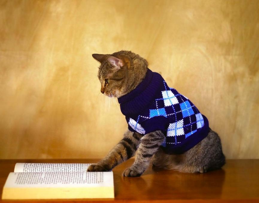 gato leitor