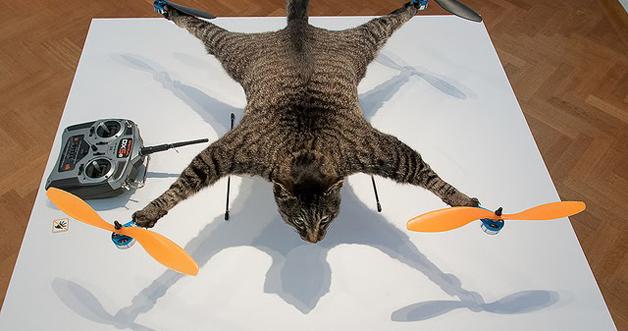 drone-cat