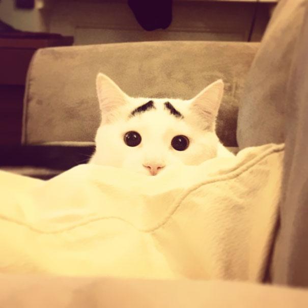 gato-sobrancelha-2