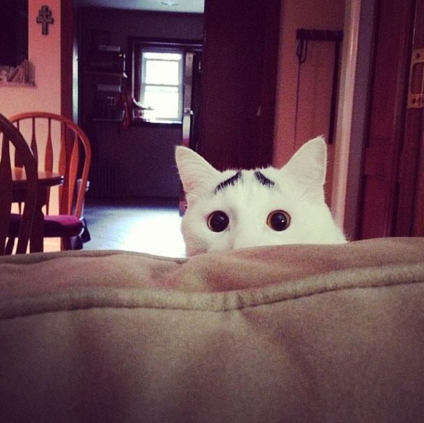 gato-sobrancelha-3