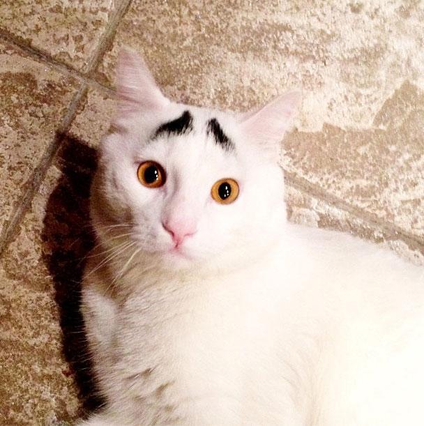 gato-sobrancelha-4