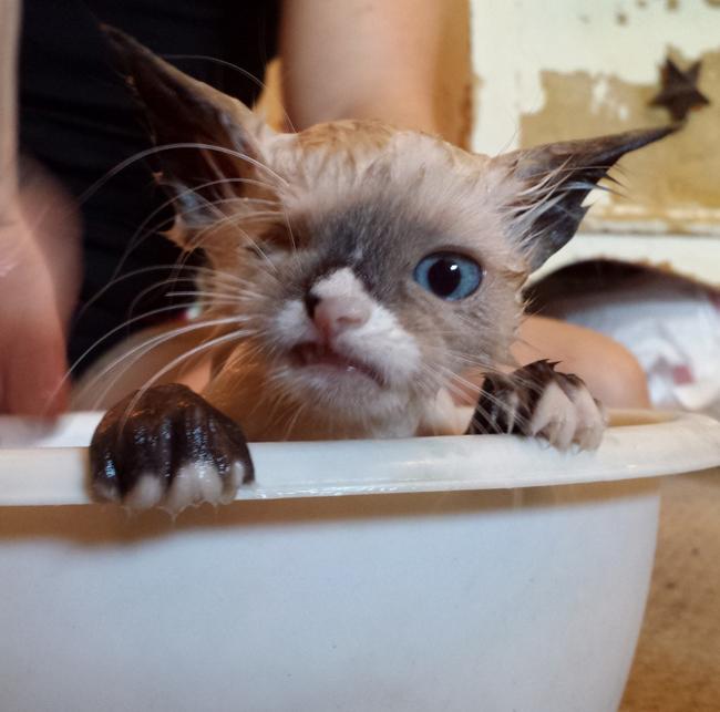 pirata banho
