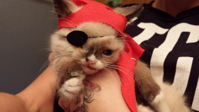 pirata-true