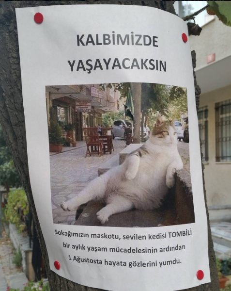 gato turquia estatua