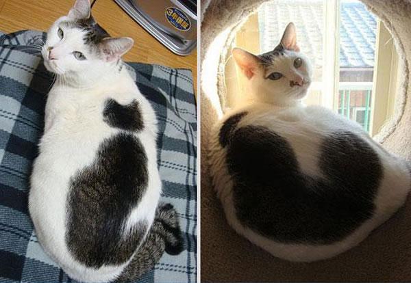 gato-desenhado