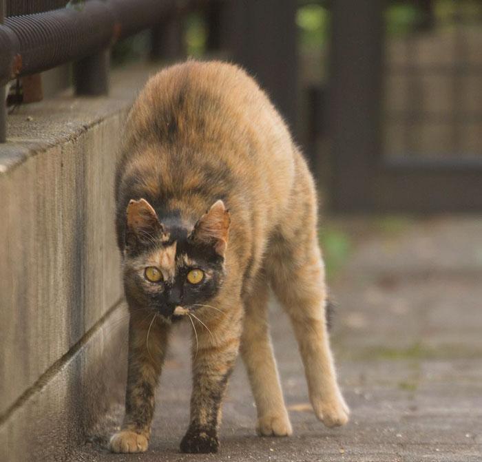 gato-de-rua-imagem-10