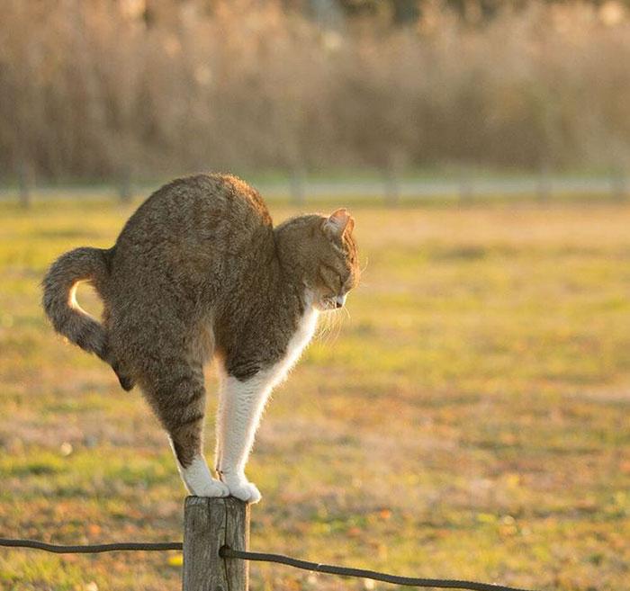 gato-de-rua-imagem-2