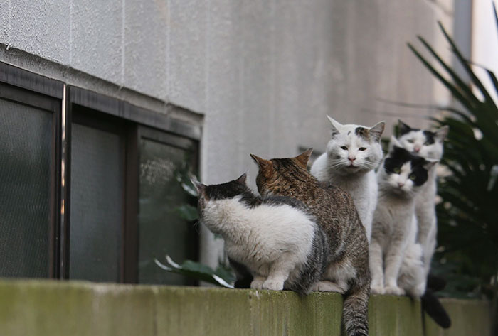 gato-de-rua-imagem-4