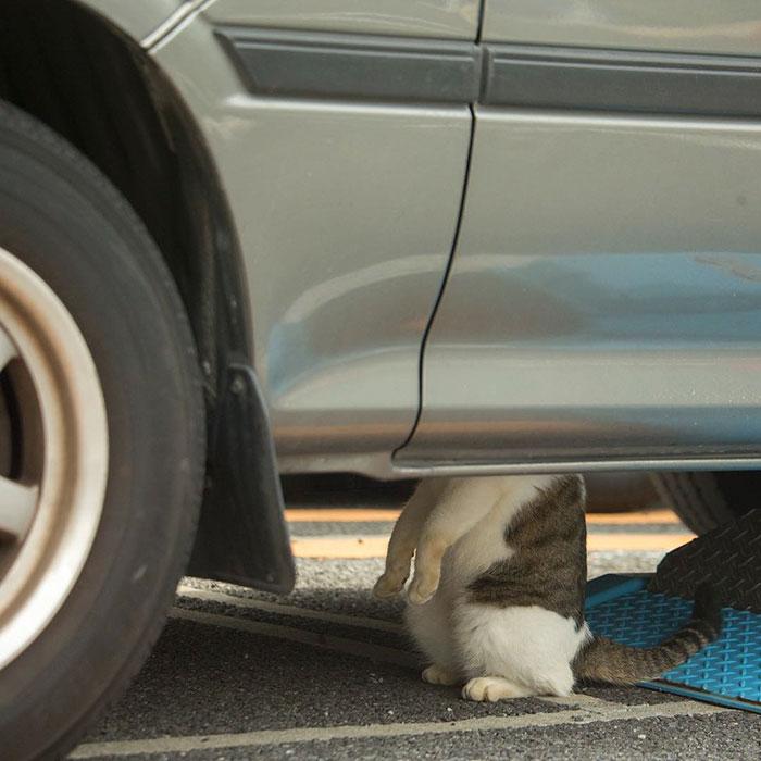 gato-de-rua-imagem-5