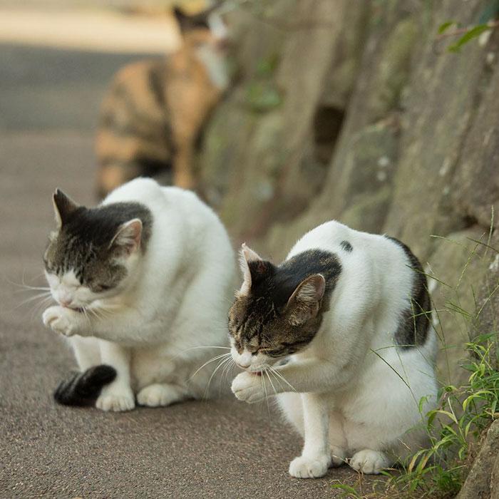 gato-de-rua-imagem-8